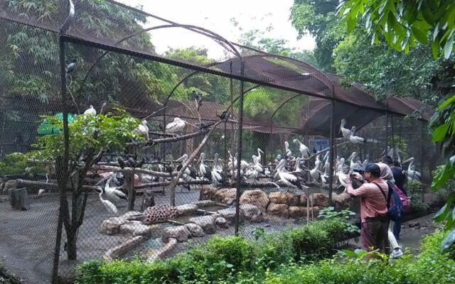 Taman Burung di Kebun Binatang Surabaya KBS