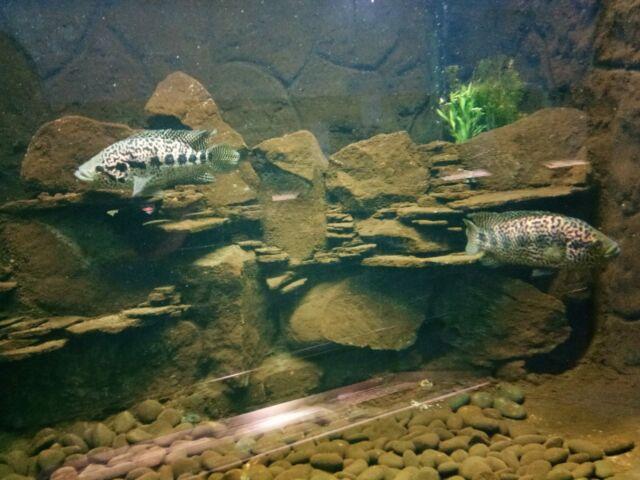 Zona Aquarium
