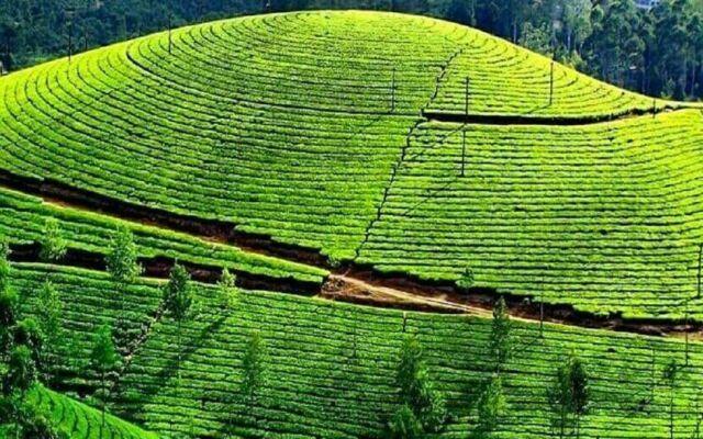 Kebun Teh Jamus Ngawi