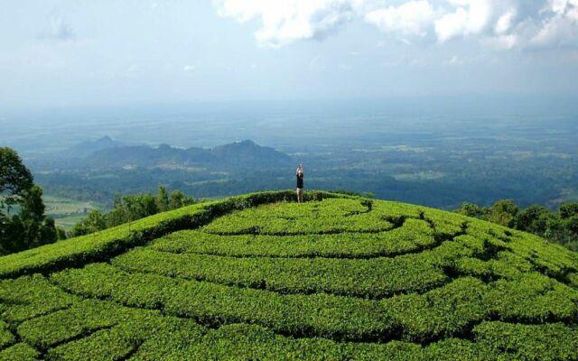 area perbukitan hujau dengan hamparan tanaman teh
