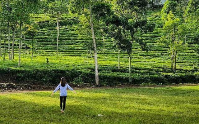 Pemandangan Kebun Teh Jamus Ngawi yang hijau dan segar membuat udaranya sejuk dengan suasana yang alami