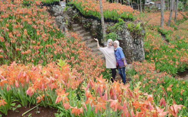 area taman bunga amarilis