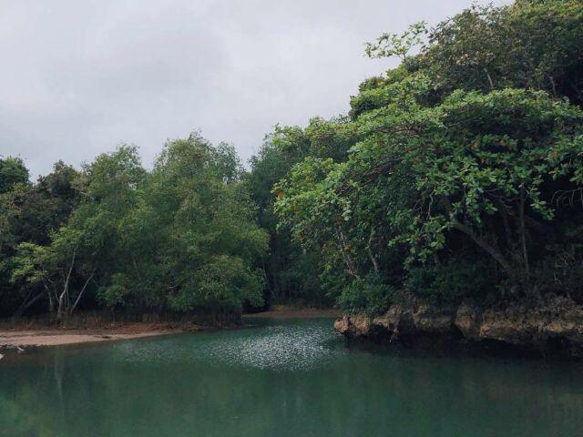 Pemandangan hutan bakau dari Pantai Bantol