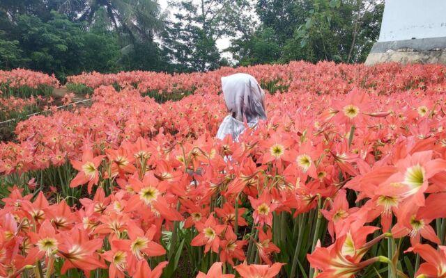 taman bunga yang tertata rapi