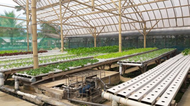 kebun hidroponik di jendela alam