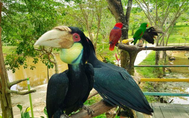Koleksi Burung di Lamin Etam Ambors