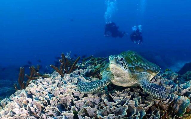 Snorkeling di perairan pulau komodo