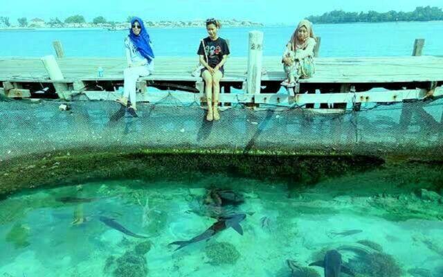 bermain dengan hiu di pulau seribu