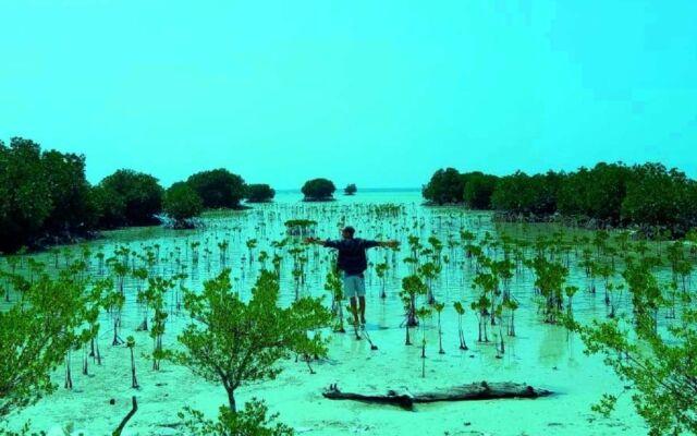 kawasan hutan mangrove pulau seribu