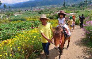 naik kuda di happy farm ciwidey