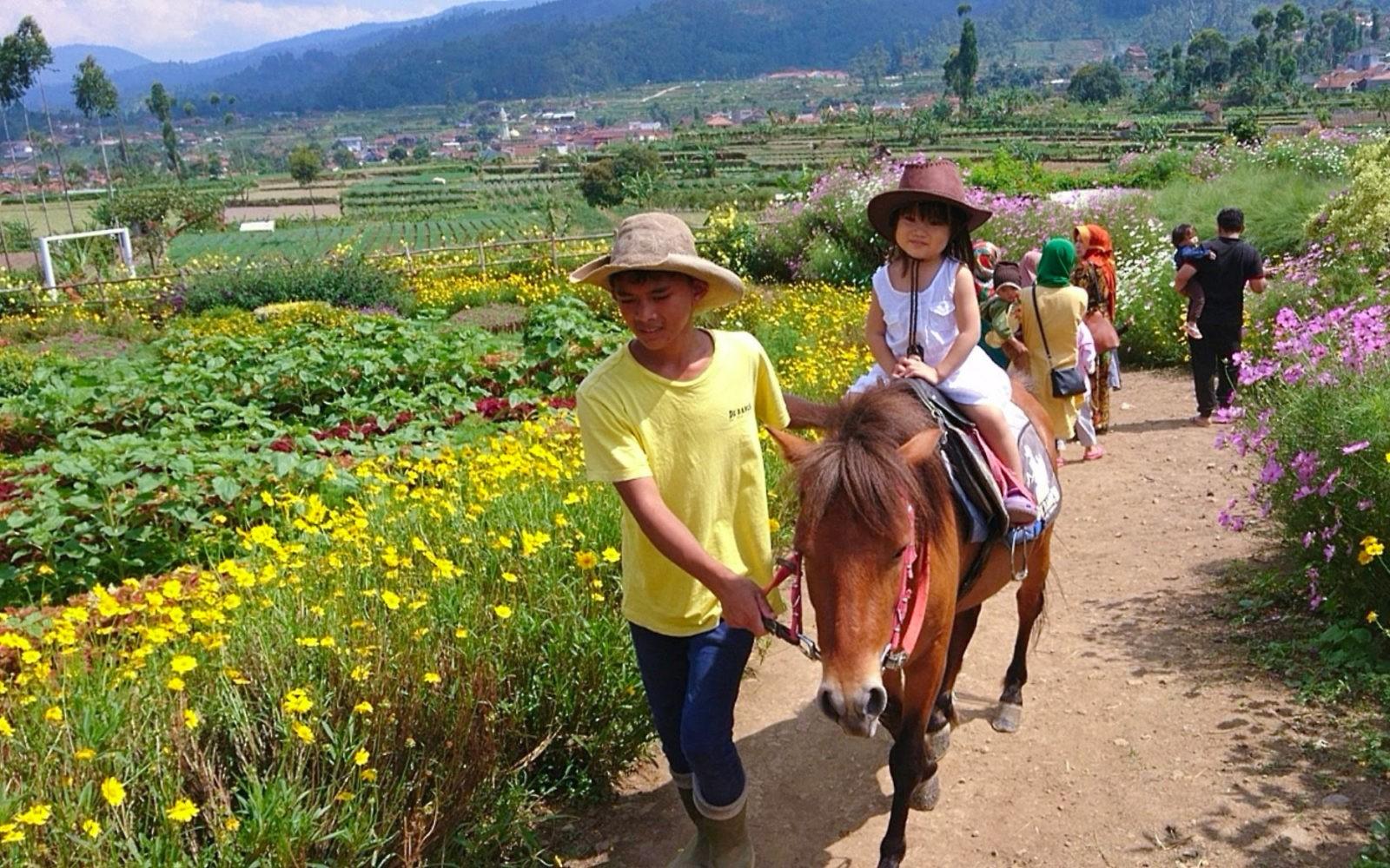Happy Farm Ciwidey Wisata Keluarga Ramah Anak Januari 2020