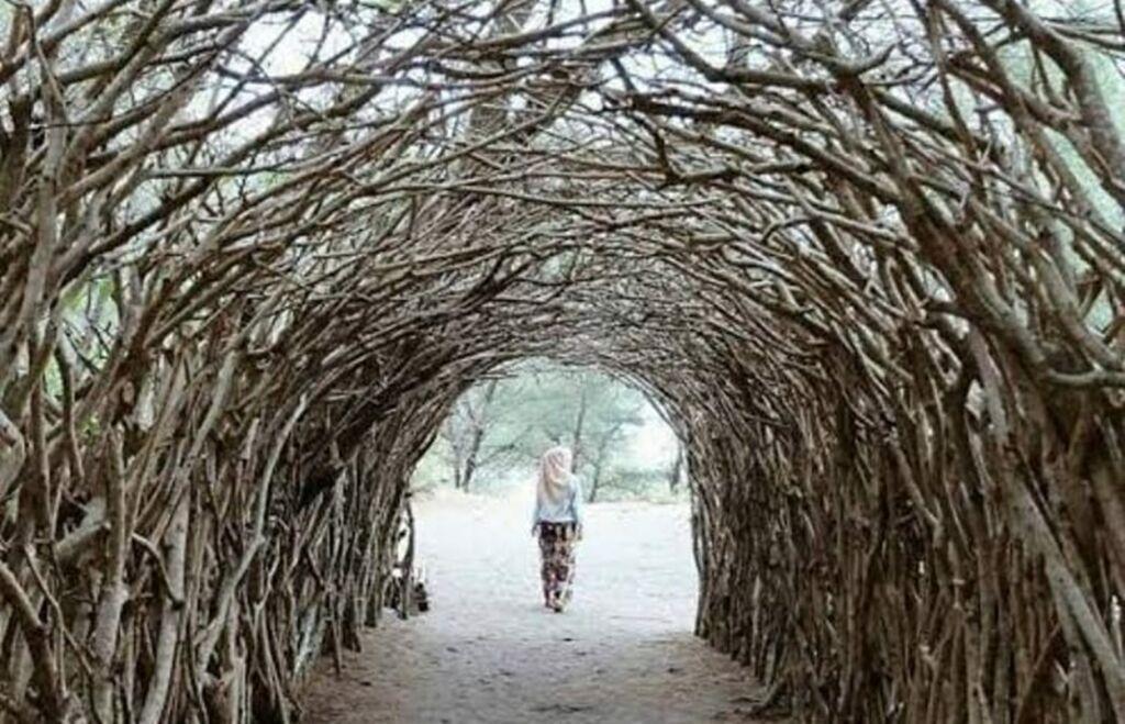 Ranting Pohon Cemara Berbentuk Terowongan