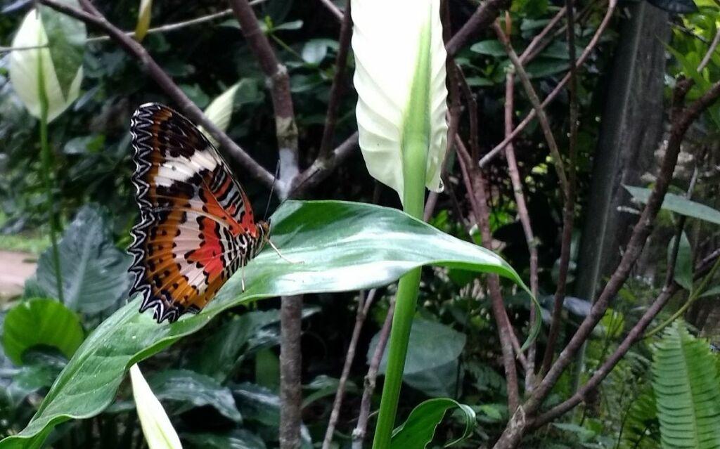 Kupu-kupu di alam
