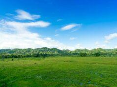 padang savana taman nasional alas purwo