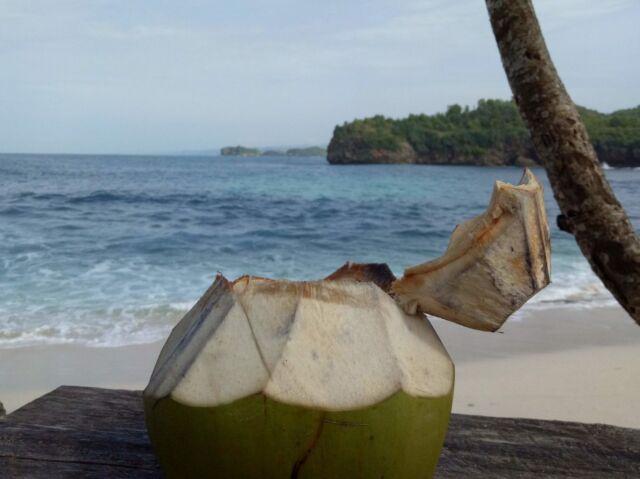 minuman kelapa muda primadona di pantai srau