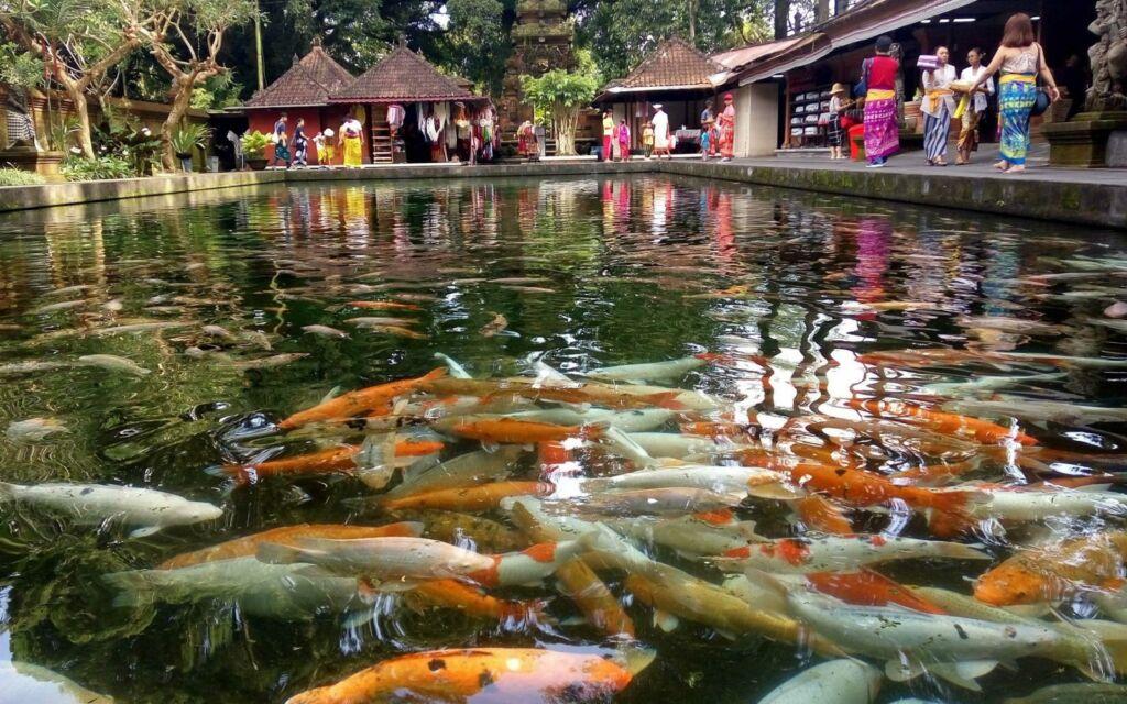 Ikan di Kolam