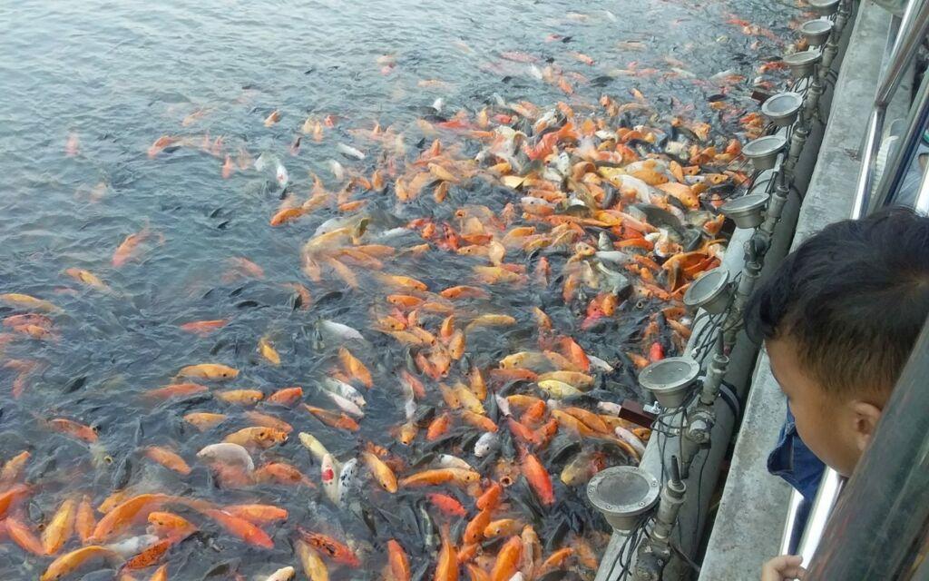 Pengunjung memberi makan ikan di danau