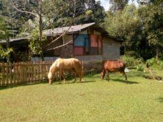 Kuda liar Studio Alam TVRI