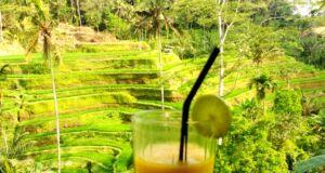 kulineran dengan pemandangan sawah di Tegallalang Rice Terrace