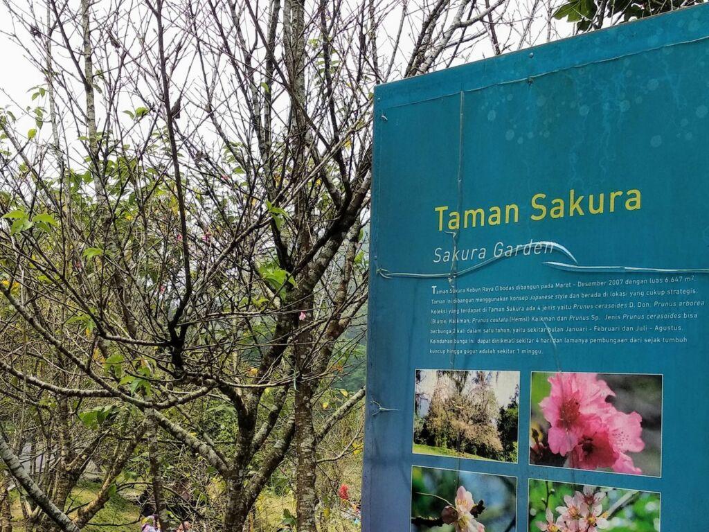 Taman Sakura Cibodas