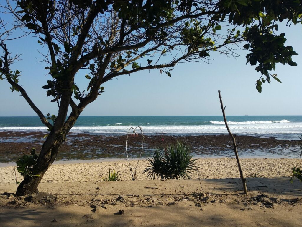 Pantai Watu Kodok yang Banyak Ditumbuhi Pepohonan