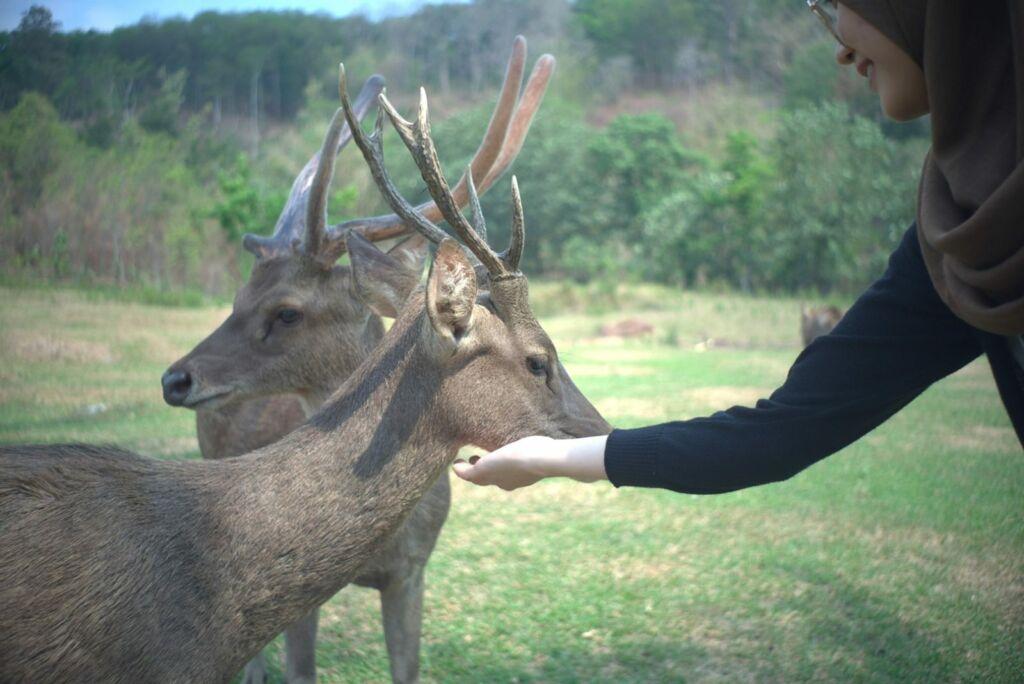 Dekat dengan rusa