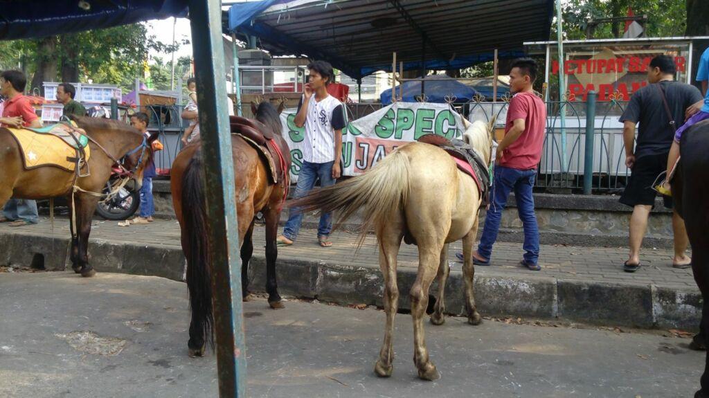 Kuda tunggang
