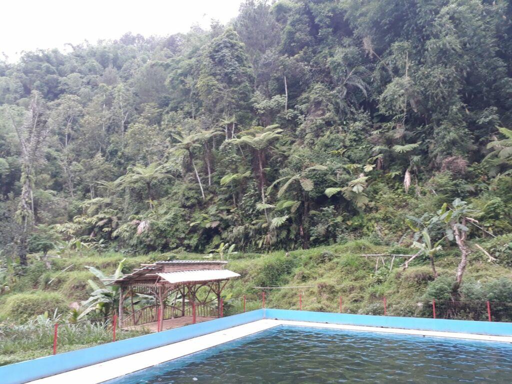 Pemandangan hutan dari kolam buatan
