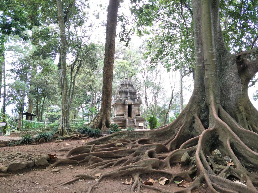 Pepohonan yang mengelilingi candi