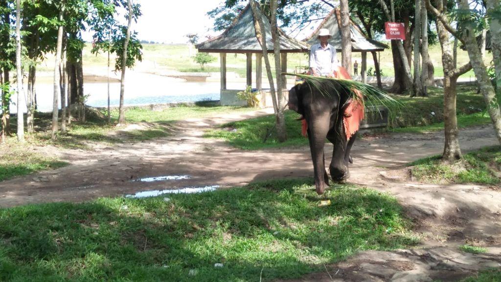 Gajah Berjalan di Area Hutan