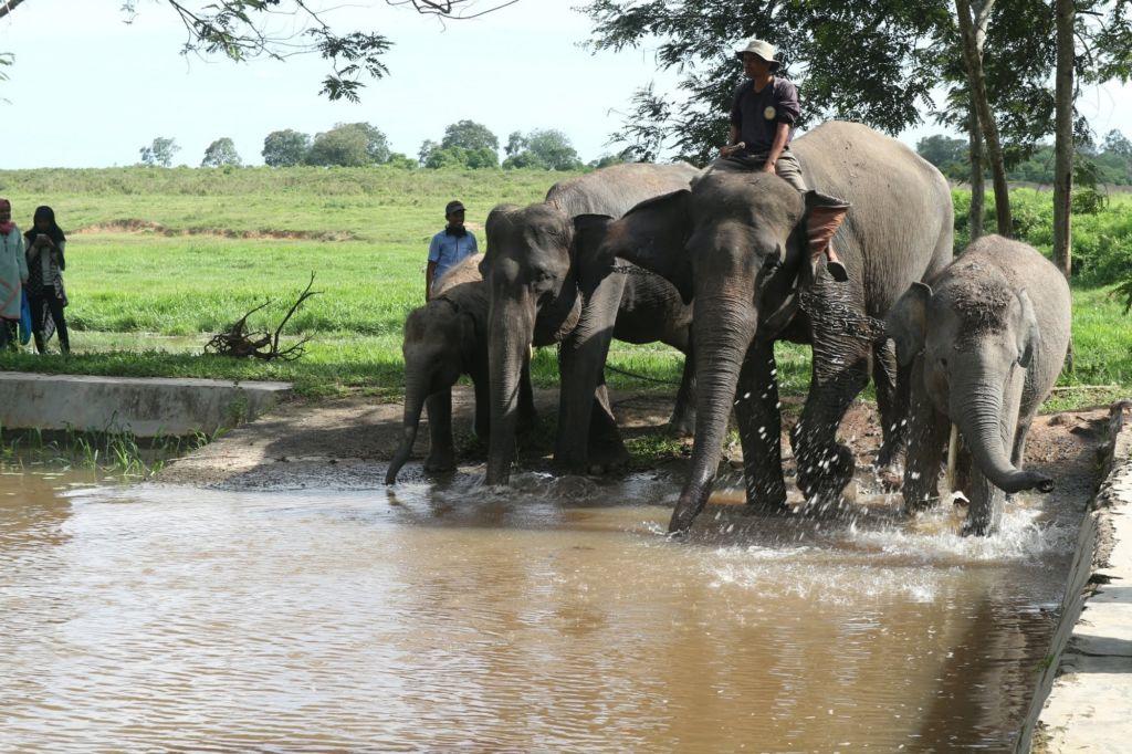 Gajah sedang Mandi di Sungai