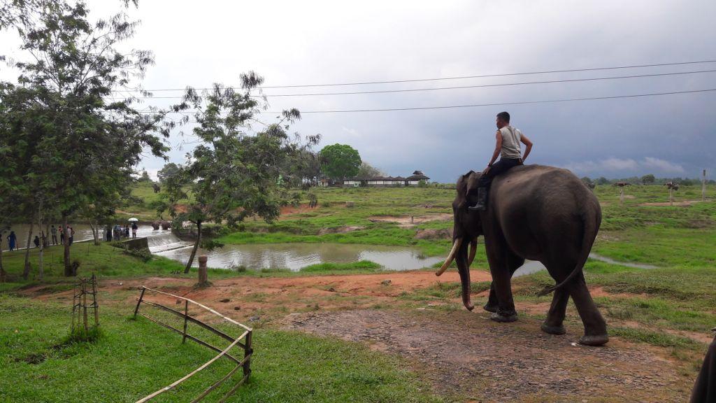 konservasi gajah di Taman Nasional Way Kambas