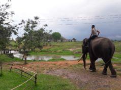 Pawang bersama Gajah