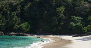 Pemandangn Indah Tepi Pantai Teluk Hijau
