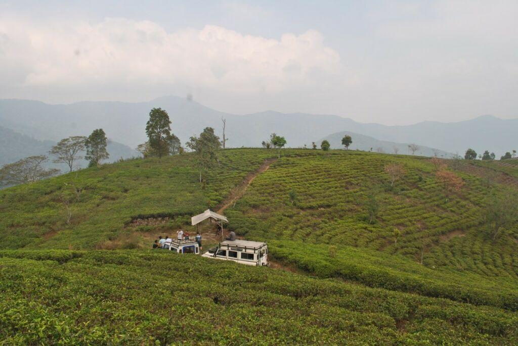Off road di kebun teh