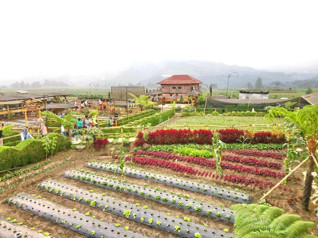 Kebun sayur organik