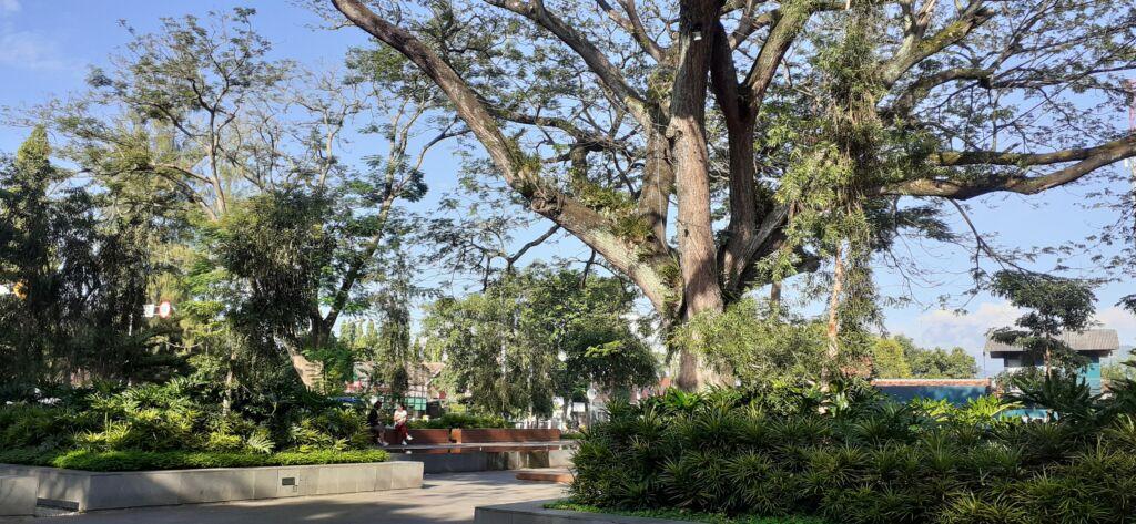 suasana taman sekartaji dengan pepohonan besar dan rindang