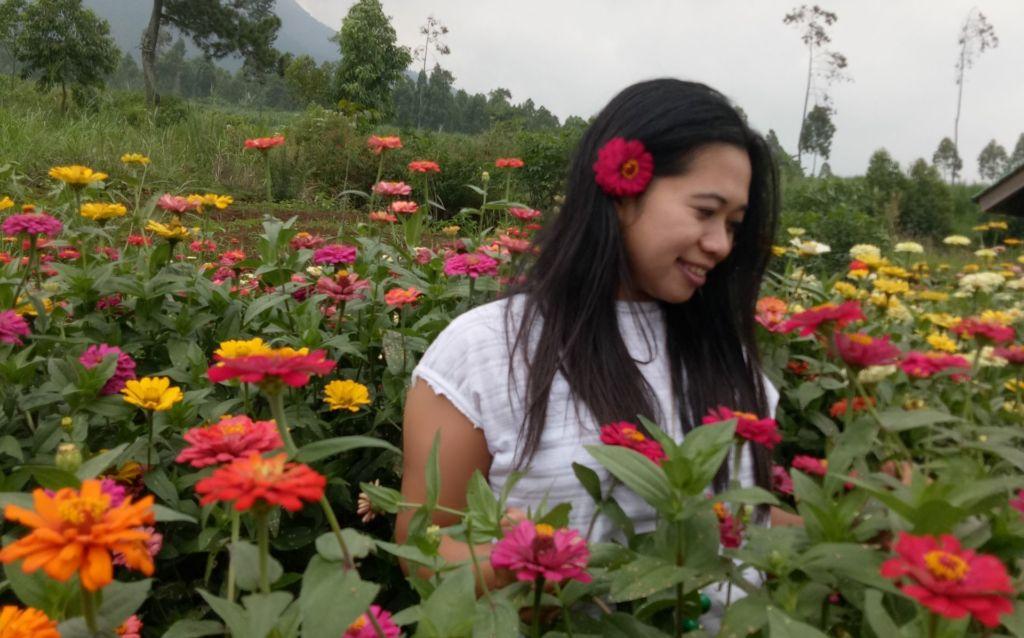 Wisatawan menikmati indahnya berbagai bunga di Kebun Bunga Matahari