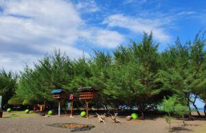 Deretan Pohon Cemara di Pantai Cemara. Foto: Google Maps / Afifa Istamarra