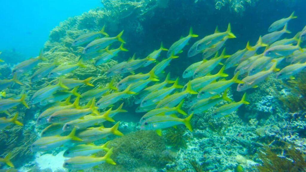 terumbu karang dan ikan-ikan di blue lagoon karangasem bali