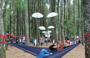 Bersantai dengan Hammock di Tengah Wisata Pinus Songgon. Foto: Google Maps / Wawan Tao