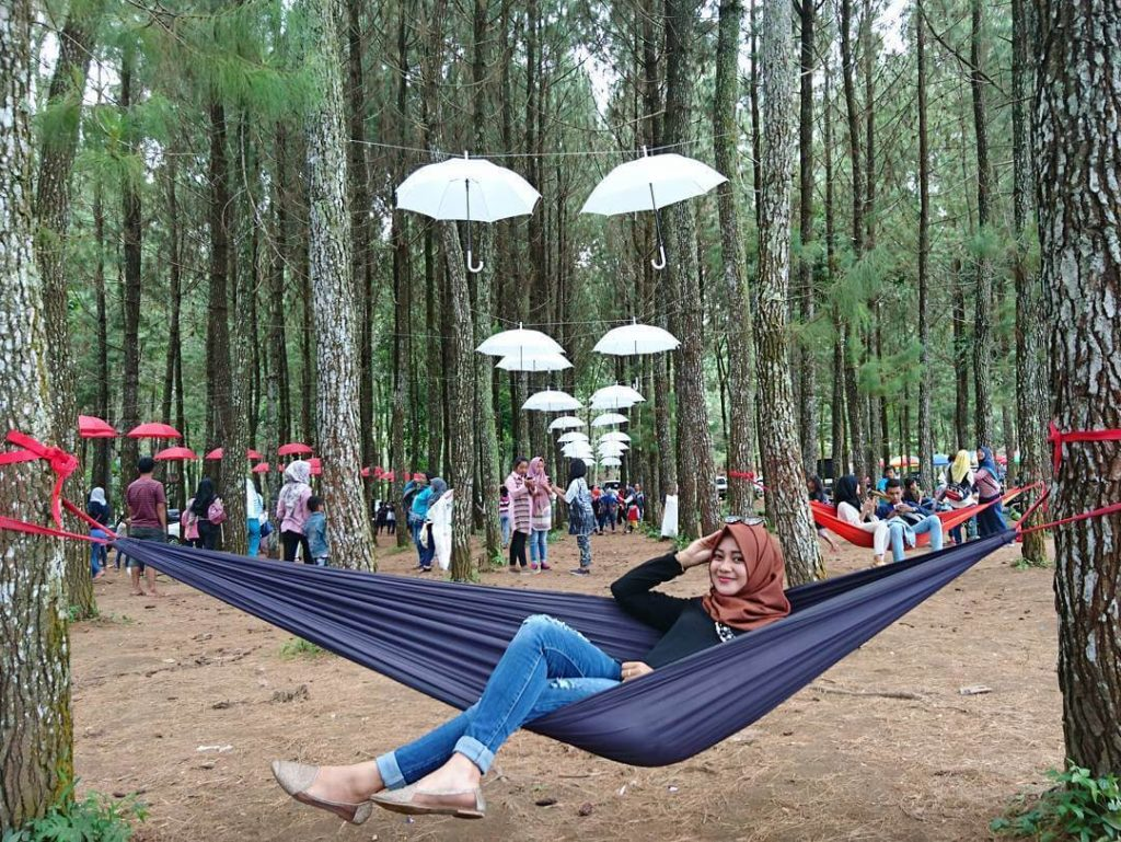 bersantai di hammock yang digantung diantara pohon pinus