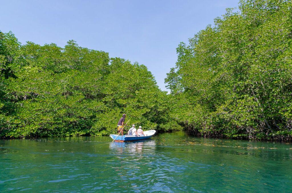Hutan Mangrove Nusa Lembongan