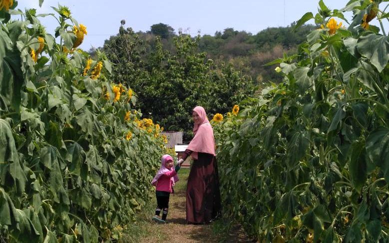Ibu dan Anak Menikmati Waktu Bersama di Kebun Bunga Matahari Kediri. Foto: Google Maps / rahmi puspita