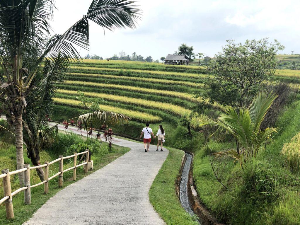 Jalan Setapak di Area Jatiluwih Rice Terrace