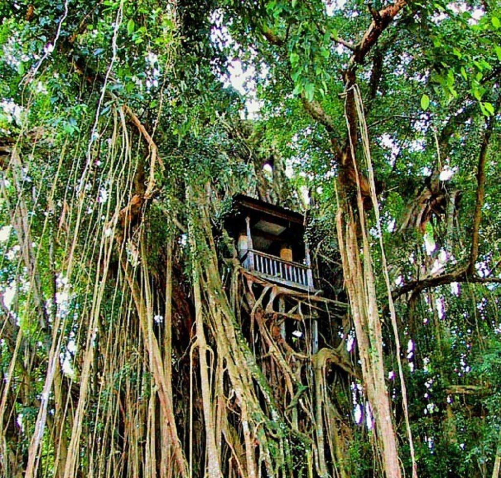 Keberadaan Bale Kulkul pada batang pohon Beringin merupakan simbol keunikan budaya masyrakat - pura_kehen_bangli