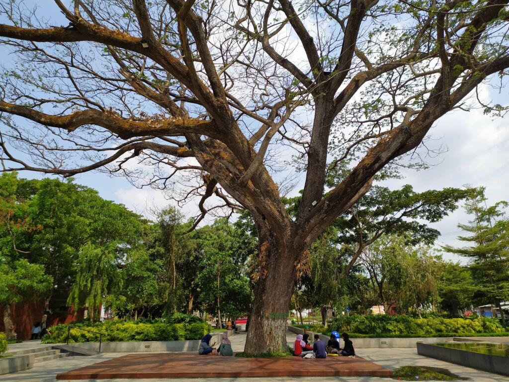 bangku-bangku taman yang tersedia di bawah pohon