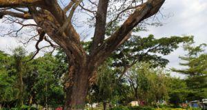 bangku-bangku taman di bawah pohon rindang
