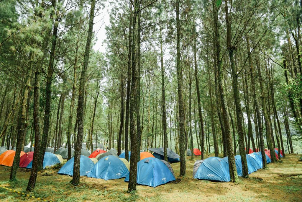 wisatawan sedang berkemah di tenda-tenda di antara pohon pinus