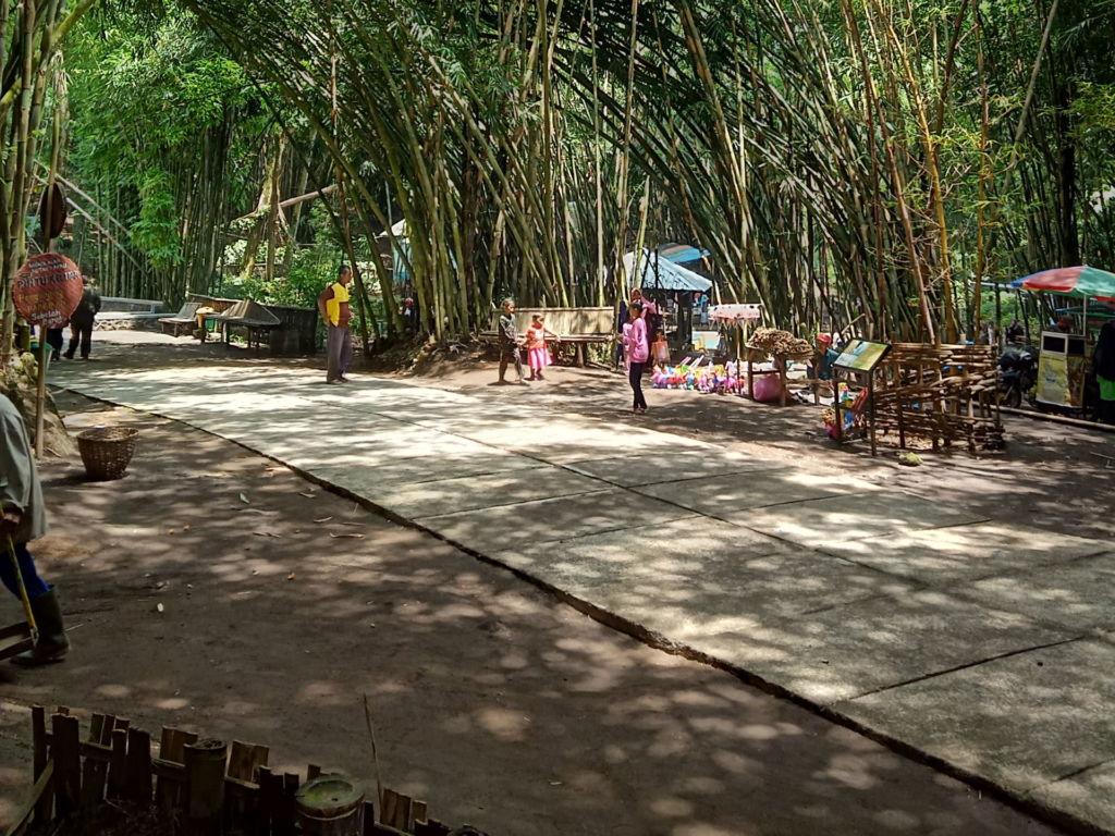 Pohon bambu yang rimbun di area hutan bambu lumajang